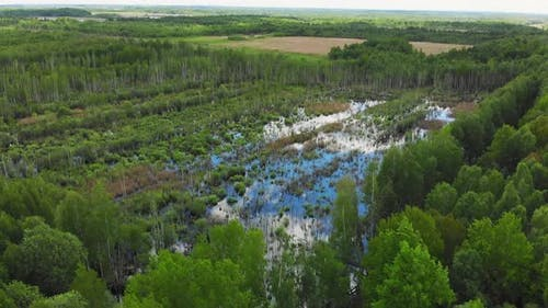 Flooded Forest In Lithuania After Rain