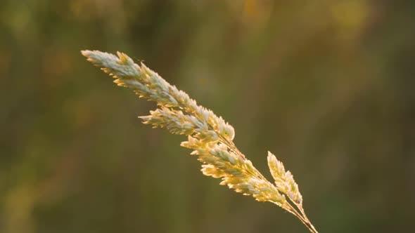Thumbnail for Grass in summer sunlight