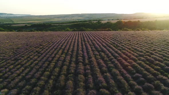 Thumbnail for Beautiful lavender field in Provence