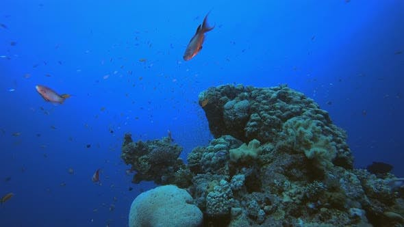 Cover Image for Marine Tropical Underwater Fish