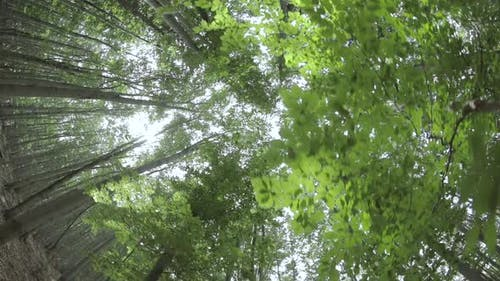Treetops