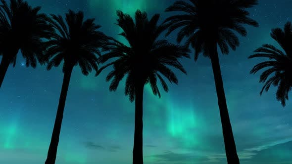 Thumbnail for Driving Under Palm Trees With Aurora in Background