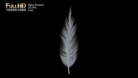 White Feather Rotation Loop