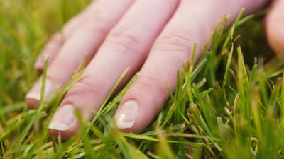 Touching Fresh Green Grass with Hand