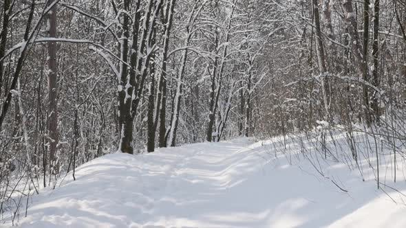 Thumbnail for Slow motion walk on  clean white  snow 1920X1080 FullHD video - Frozen nature and forest by winter