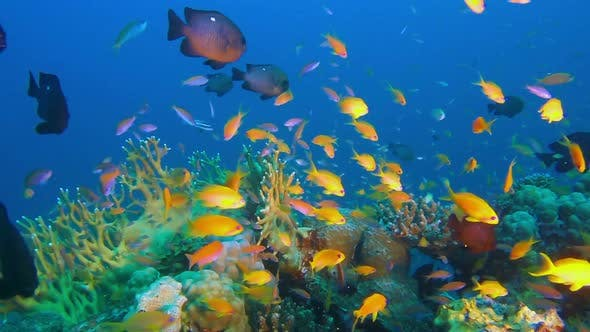 Thumbnail for Underwater Tropical Fishes and Grouper Fish