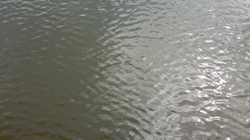 Ripples in the water. Reflection of the sun rays.