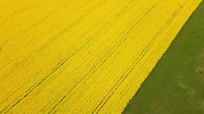 Bird's eye view from a drone of a passing canola crop
