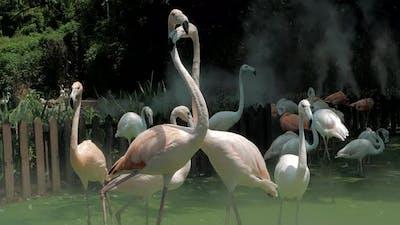 Group of Flamingos at the Zoo
