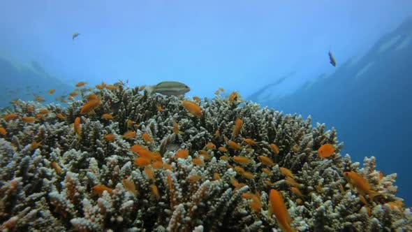 Cover Image for Tropical Colorful Underwater Seascape