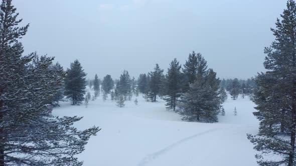 Thumbnail for Fliegen durch riesige Bergbäume am Abend bei starkem Schneefall und Nebel in den Bergen im