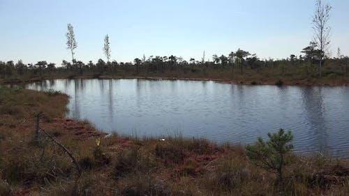 Swamp 7