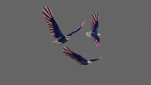 USA Eagles - 3 Birds - Flying Loop - Side Angle 4K