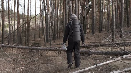 Tourist in a Pine Forest Goes Along the Route