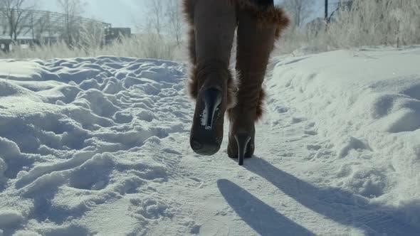Thumbnail for A Walk on Snow Floor with Sunlight