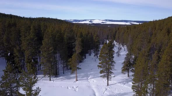 Forest Bighorn Mountains in Winter in Wyoming United States