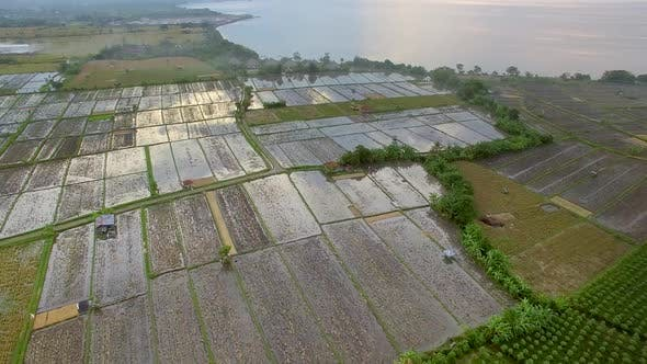 Thumbnail for Aerial view above of paddy field near the coast, Bali island, Indonesia.
