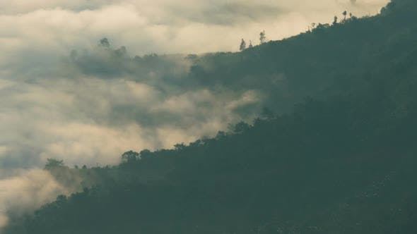 Thumbnail for Fog Moving In Forest