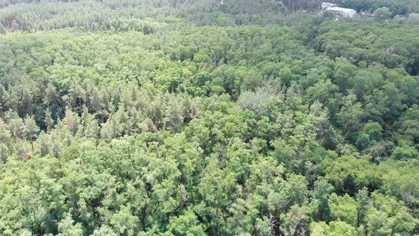 Thumbnail for Pine Forest, Aerial View with Drone. Top View in Pine Wood Park on Forest Trees.