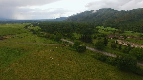 Thumbnail for Aerial view of pasture with cows on green hill in old village, farming business