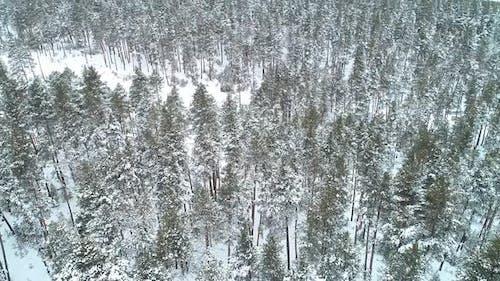 Snowy Jungle