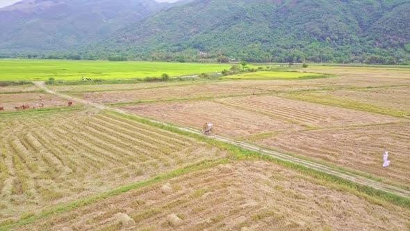 Luftaufnahme der Landschaftslandschaft mit Feldern von Hügeln