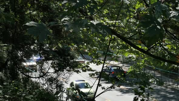 Thumbnail for Park Road Traffic in Windy Forest Trees