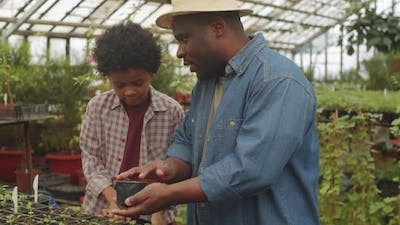 Afro-American Farmer Teaching Son How to Work in Greenhouse