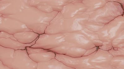 Mimic Texture Loop of Internal Organs