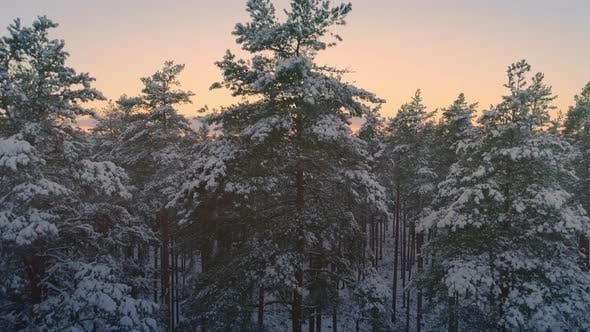 Thumbnail for Descending Shot Of Winter Forest