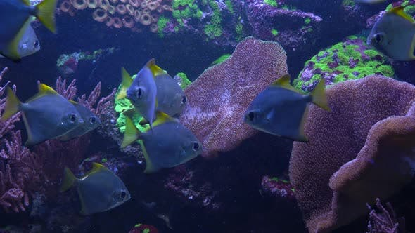 Bright Fish Swim in the Aquarium