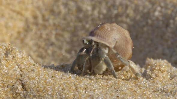 Thumbnail for Hermit Crab On Beach