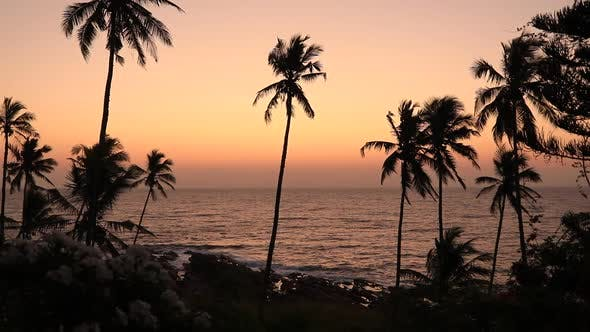 Thumbnail for Palm Trees on the Shore of a Tropical Beach at Sunset. Sri Lanka.