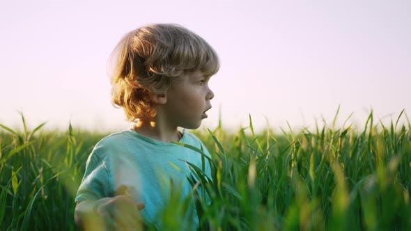 Portrait of Curly Kid Standing in Fresh Green Wheat Field