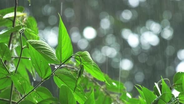 Thumbnail for Tropical Rain