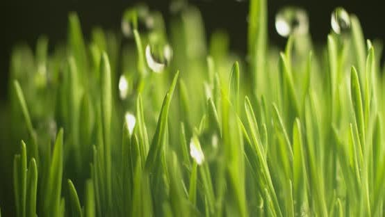 Thumbnail for Water dripping onto grass in super slow motion.  Shot on Phantom Flex 4K high speed camera.