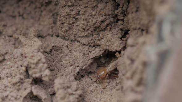 Thumbnail for Termite