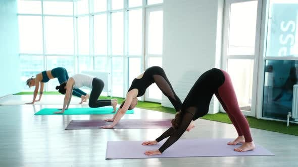 Group of Young Healthy Women Are Practicing Downwardfacing Dog Pose