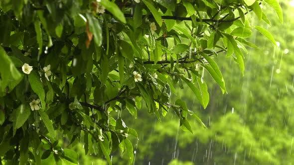 Thumbnail for Raining On Plant Leaves