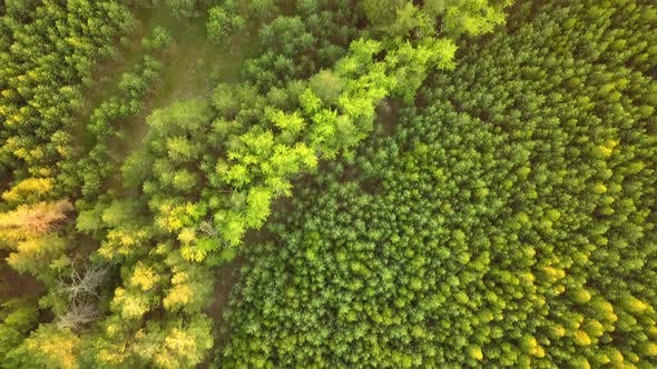 Cover Image for Summer Forest From Above