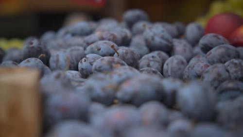 Freshly harvested organic plum