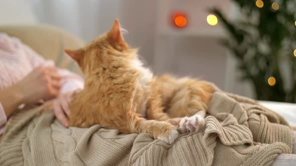Thumbnail for Woman Stroking Red Tabby Cat in Bed at Home