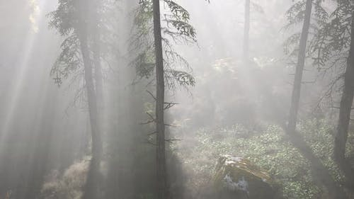 Bright Early Morning Forest in Mountains