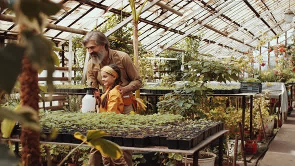Thumbnail for Cheerful Girl Spraying Plants in Greenhouse Farm with Grandfather