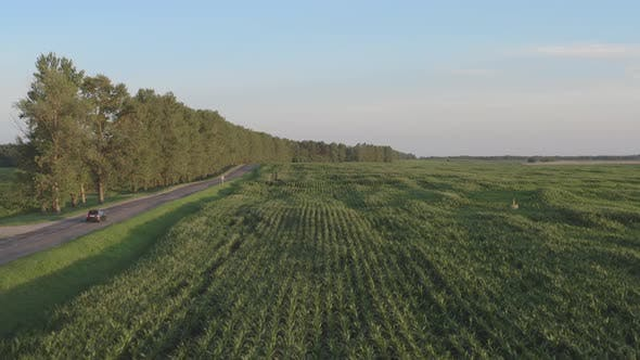 Straight Road in Agriculture Side. Aerial View of Grey Car Driving on Country Road.