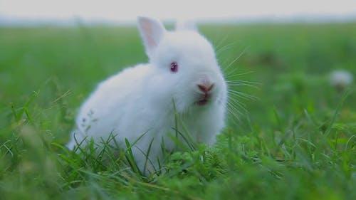 Rabbit on Green Grass White Rabbit Little Rabbit