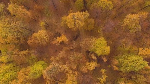 Aerial View of a Biker Riding his bike in the Forest During Autumn Season