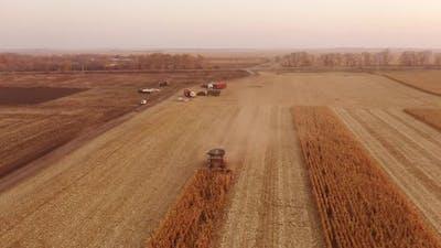 Combine Harvester Working on Corn Plantation