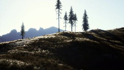 Trees on Meadow Between Hillsides with Conifer Forest