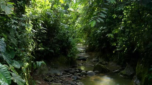 Going through a small creek in a secondary forest with a green coloration